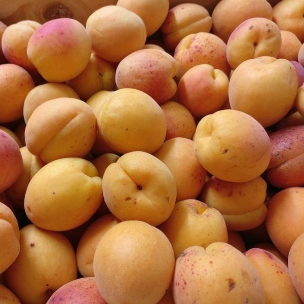 Abricot Bio Terre Adelice