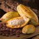 Cacao Bio Terre Adelice