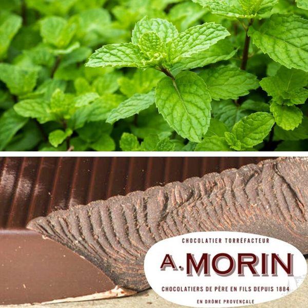 Menthe Feuilles Chocolat Bio Terre Adelice