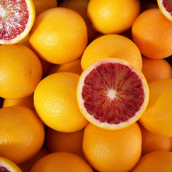Orange Sanguine Bio Terre Adelice