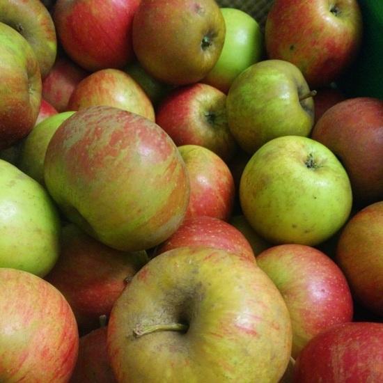 Pomme Bio Terre Adelice