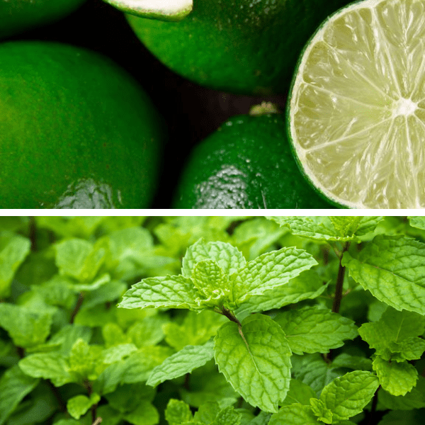 Citron Vert Menthe Feuilles Bio Terre Adelice